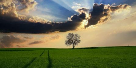 Quel-impact-environnemental-panneaux-solaires